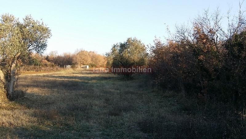Poljoprivredno zemljište idealno za sadnju maslina